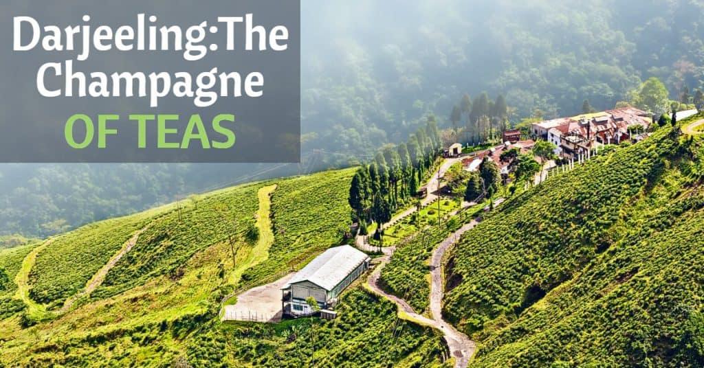 Darjeeling region of India